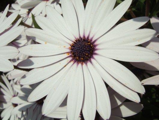 Blütenweiß