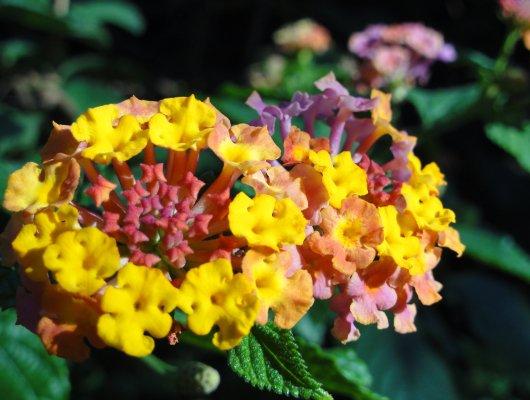 florales_2012_07_02