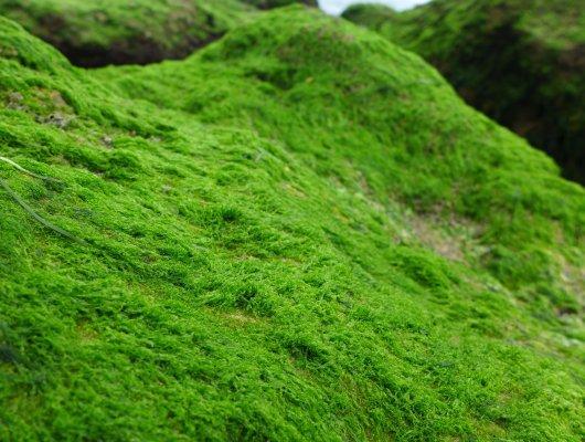 Sattes grün
